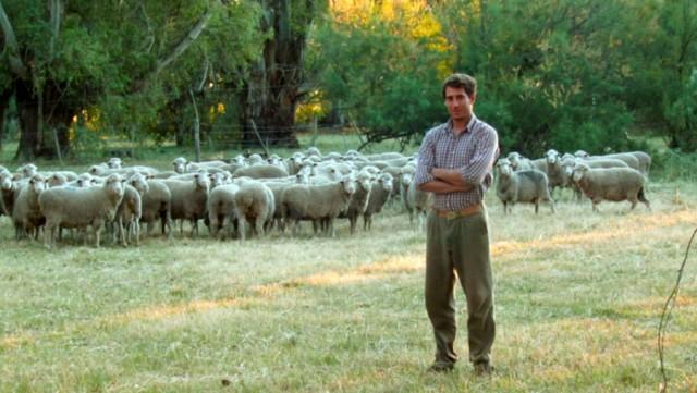 Productor ovino, por decisión propia